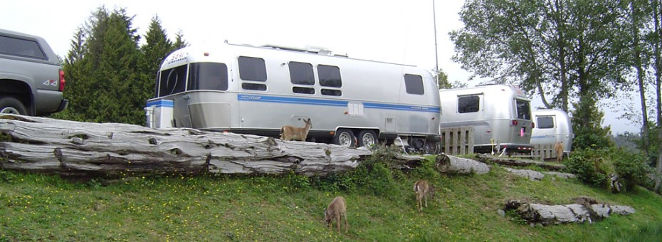 Deer feeding by trailer. Ucluelet, BC.